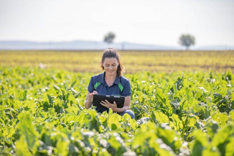 Agra Asigurări launches the Universal Sugar Beet policy, subsidized by AFIR